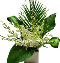 ABC Flowers St. Vincent's Hospital Melbourne Deliver A020 White Singapore Orchids Arrangement Melbourne Wide Free Delivery Melbourne Inner Suburbs