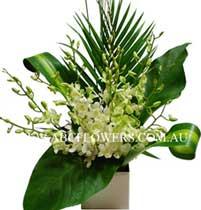 ABC Flowers St. Vincent's Hospital Melbourne Deliver A020 White Singapore Orchids Arrangement Melbourne Wide Free Delivery Melbourne Inner Suburbs