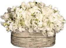 ABC Flowers St. Vincent's Hospital Fitzroy melbourne deliver a039 cremorne a flower arrangement of white seasonal flowers melbourne wide free delivery to all melbourne inner suburbs