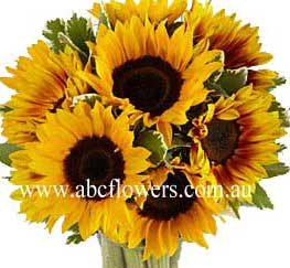ABC Flowers st. vincent's hospital fitzroy melbourne deliver b028 sun flowers melbourne wide free delivery to melbourne inner suburbs 7 days a week