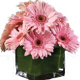 ABC Flowers st. vincent's hospital fitzroy melbourne deliver V001 Eleftherios gerberas in a vase melbourne wide 7 days a week free delivery melbourne inner suburbs