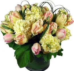 ABC Flowers st. vincent's hospital fitzroy melbourne deliver v013 stocks tulips in fish bowl melbourne wide 7 days a week free delivery melbourne inner suburbs