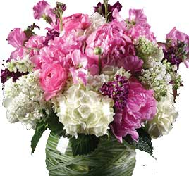 ABC Flowers st. vincent's hospital fitzroy melbourne deliver v018 maria melbourne wide free delivery melbourne inner suburbs 7 days a week