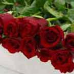 ABC Flowers st. vincent's hospital fitzroy melbourne deliver valentine's day red roses melbourne wide