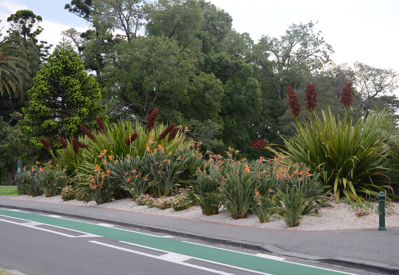 eastern hill florist st. vincent's hospital melbourne weekly new letter 26 Nov 2012 gymea lily